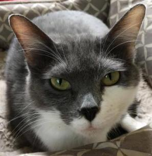Concord Humane Society Cats