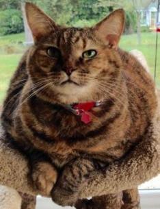 Cat Adoption Concord Nc
